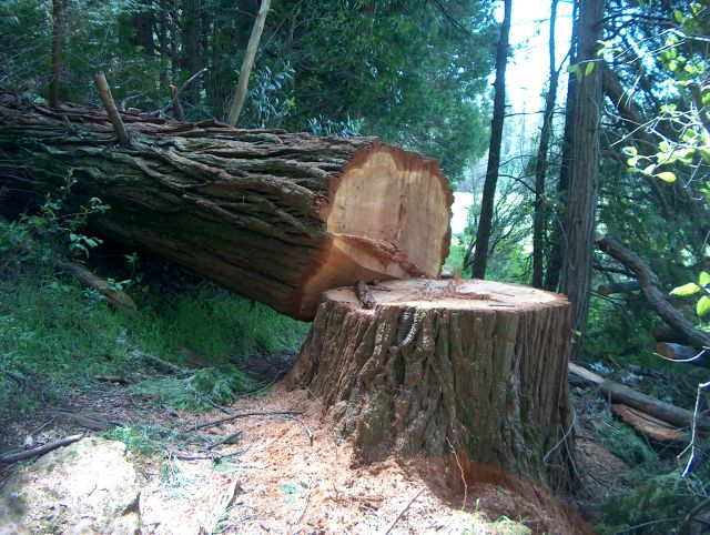 Adv Science Why You Should Not Cut Down The Trees